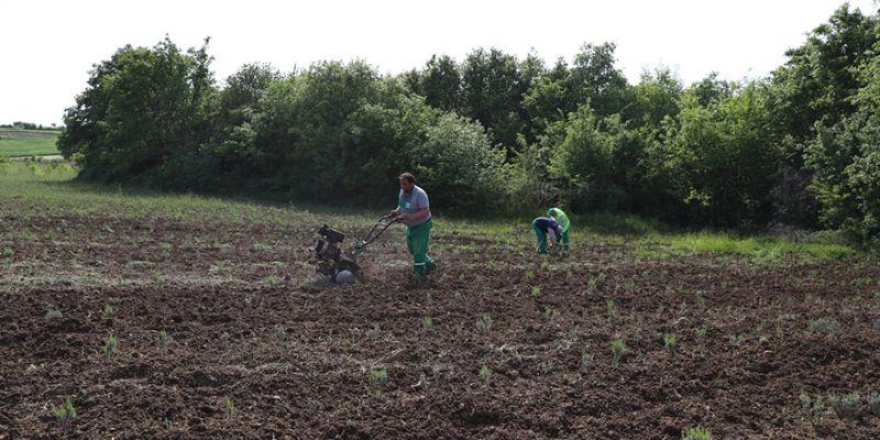 Kompost gübre üretimi başladı