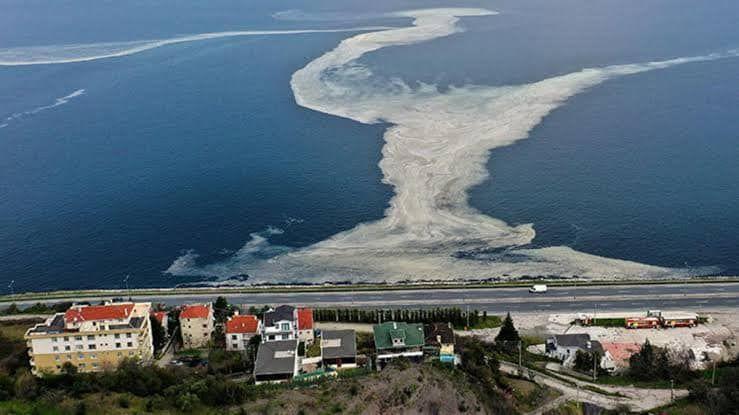 Deniz salyasıyla mücadelede kent konseylerine ortak çağrı