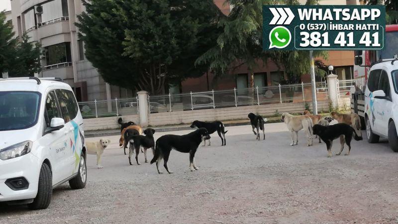 Bir kadrajda 13 sokak köpeği...