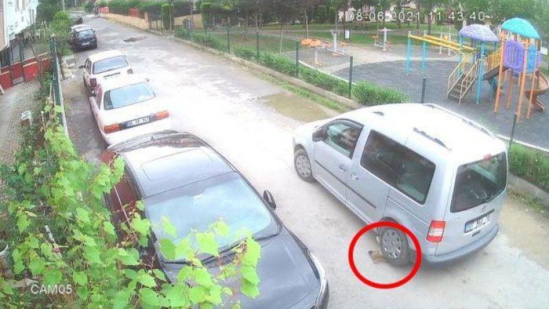 Yavru köpeği ezen sürücü cezasız kalmadı
