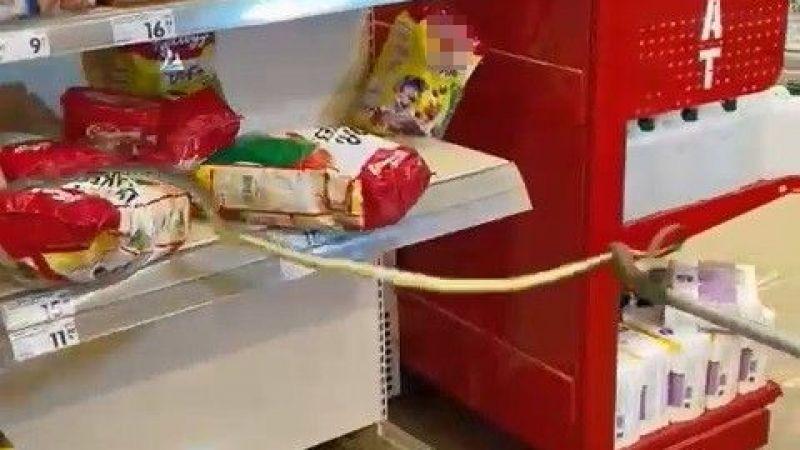 Markette rafların arasından yılan çıktı
