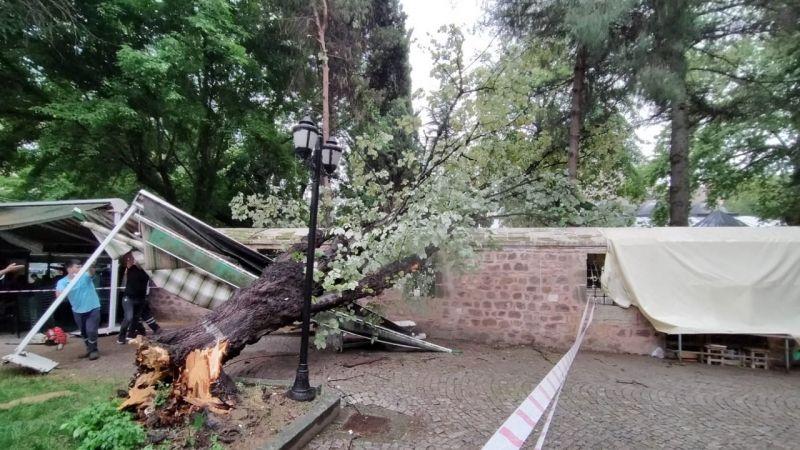 Fırtına İzmit'te ağaç devirdi