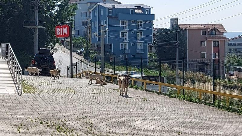 'Başıboş köpekler zehirlendi' iddiası