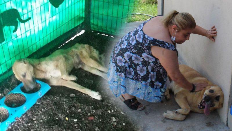 Uyutulacak köpek, 5 aylık bakımla sağlığına kavuştu