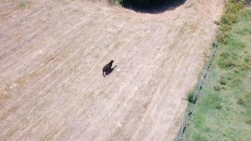 Kesilmekten son anda kurtuldu, dronedan kaçamadı