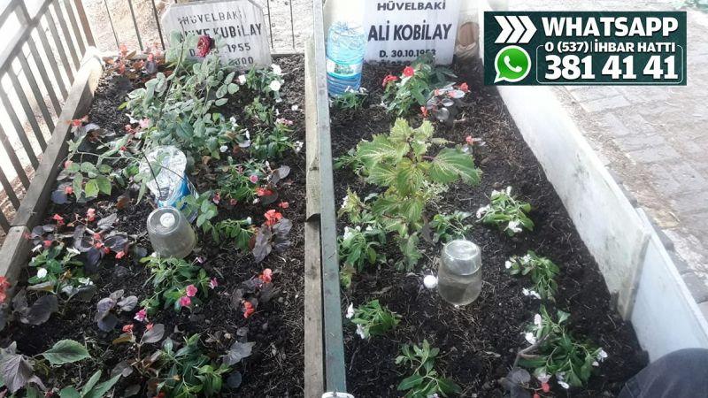 Mezarlara dikilen çiçekler çalınıyor