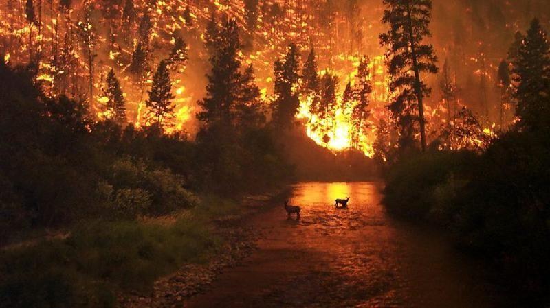 Herkes bunu merak ediyor! Orman yangınları aynı anda nasıl başladı?