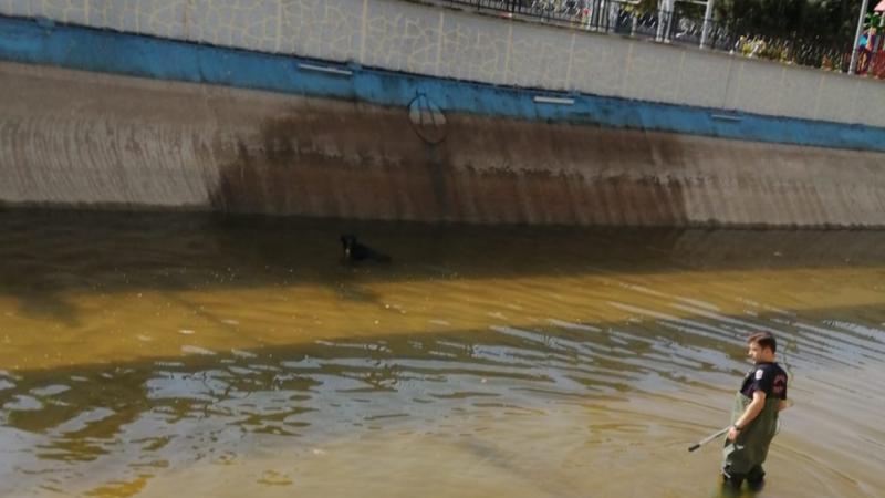 Dereye düşen köpeği itfaiye erleri kurtardı