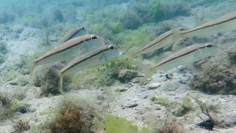 Roma dönemine ait liman mendireği kalıntıları deniz canlılarına ev sahipliği yapıyor