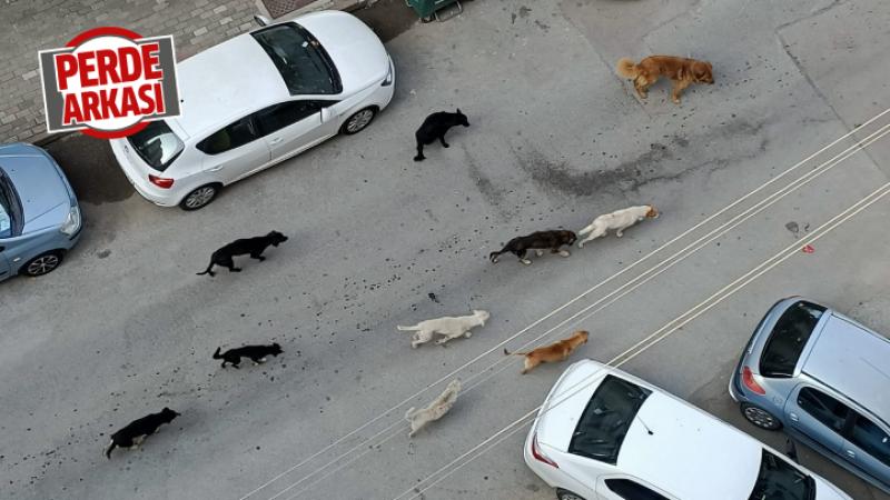 Kozluk'ta köpek sorunu çözülemedi