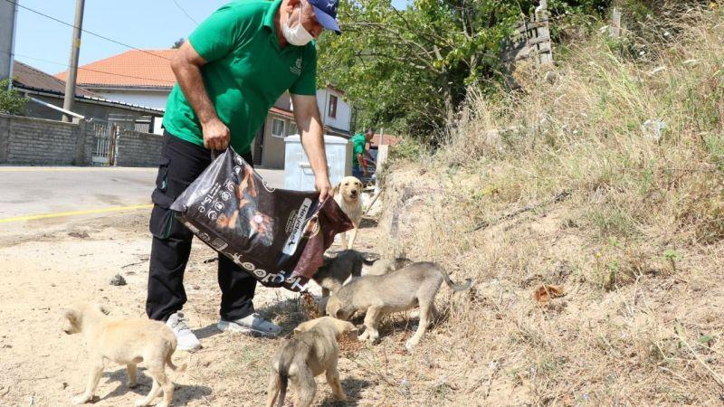 Büyükşehir'den sokak hayvanlarına 100 ton mama