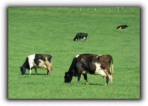 Türkiye Tarım Ve Hayvancılık Ülkesidir !!