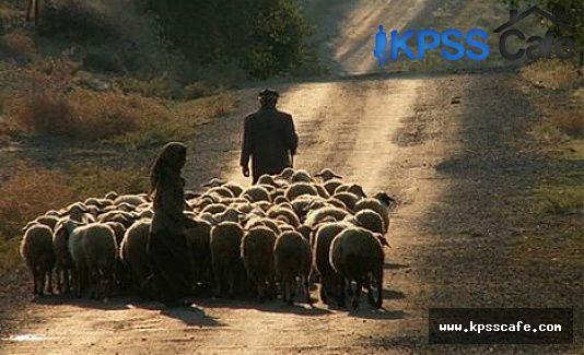 3 Bin Liraya Çoban Aranıyor