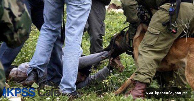 İsrailli askerlerden yine insanlık dışı görüntüler
