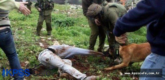 İsrail, Köpekleri Çocuklara Saldırtmanın Normal Olduğunu Söyledi!