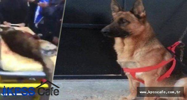 Çatışmada ölen köpek Tunus'un kahramanı oldu
