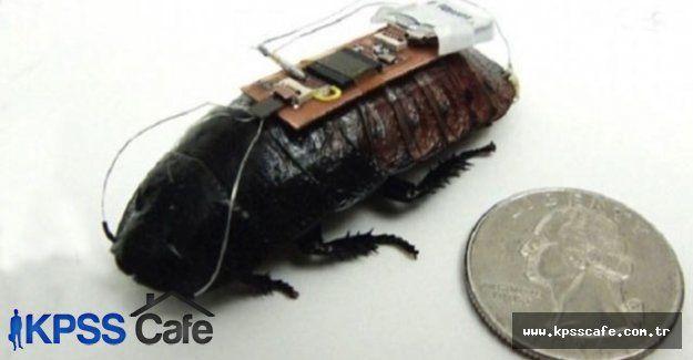 Böcekten esinlendi robot böcek yaptı robot böcekler