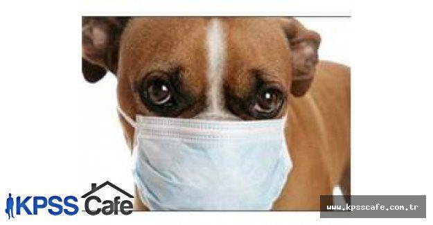 H3N2 Köpek Gribi