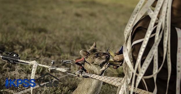 Dünyanın en küçük mayın avcıları Kamboçya'da