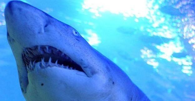 Köpekbalığı 65 yaşındaki sörfçüyü ağır yaraladı