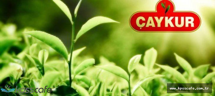 Çay İşletmeleri Genel Müdürlüğü Merkezi Atamalar İle 39 Personel Alacak