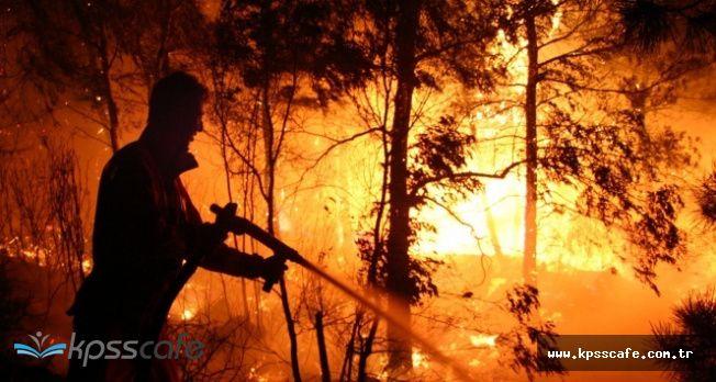 Hatay'da Orman Yangını! 3 Hektar Orman Kül Oldu