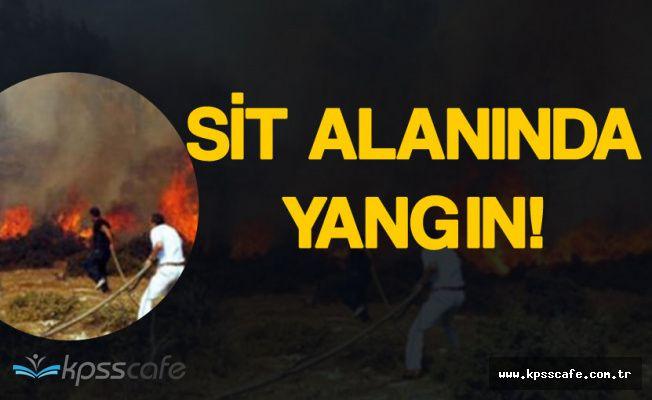 Son Dakika: Bodrum'daki Sit Alanında Yangın!