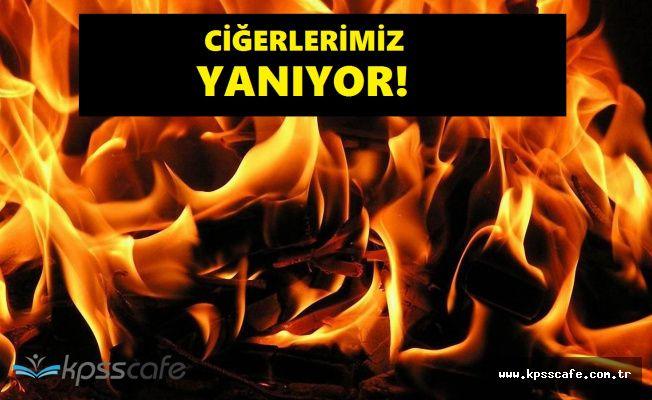Ormanlarımız Yok Oluyor! Orman Yangının Şimdiki Adresi Adana