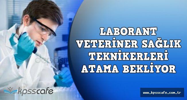 Laborant Veteriner Teknikerleri Bakan Fakıbaba'dan Atama Müjdesi Bekliyor