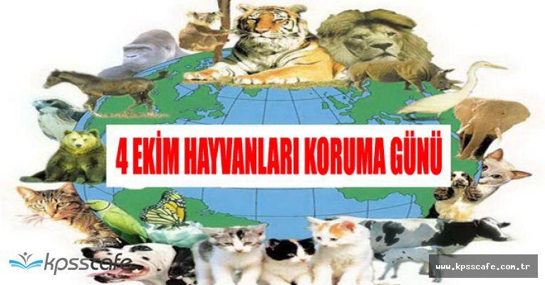 4 Ekim 2017 Dünya Hayvanları Koruma Günü Resimleri ve Mesajı
