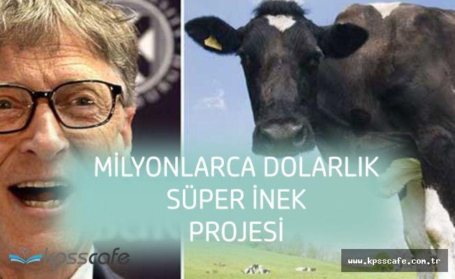 Bill Gates 'Süper İnek' İçin Milyonlarca Doları Gözden Çıkardı
