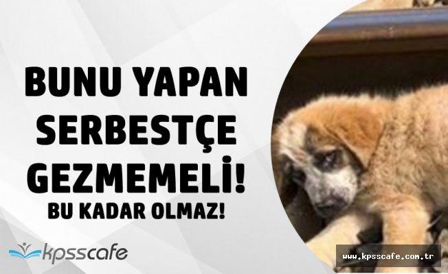 Aydın'da Kan Donduran Olay! 3 Köpeği Tren Raylarına Bağladılar! Sonrası Korkunç