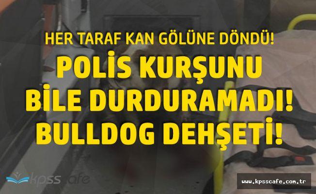 İzmir'de Bulldog Dehşeti! Ambulansı Kan Gölüne Çevirdi!