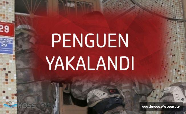 Penguen Lakaplı Örgüt Lideri Yakalandı