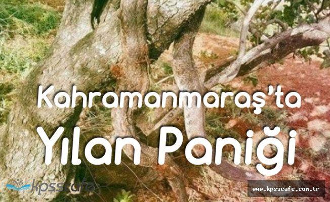 Topraktan Yılan Fışkırıyor! Kahramanmaraş'ta Panik