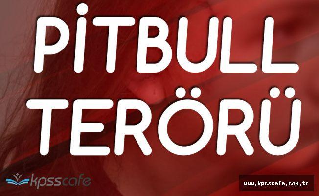 Tekirdağ'da Çocuk Parkında Pitbull Dehşeti! Parçalanmak Üzere Olan Küçük Kızı Zor Kurtardılar