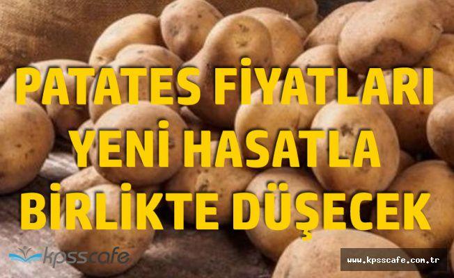 5 TL'ye Yükselen Patatesin Fiyatlarında Düşüş Bekleniyor