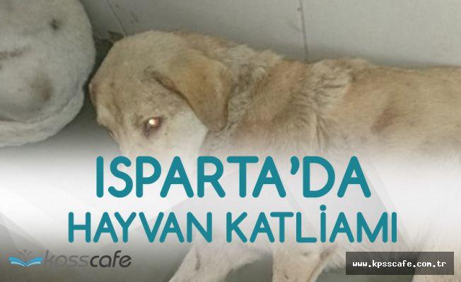 Isparta'da Korkunç Olay! 2 Köpeği Öldürdü, 3 Köpeği Yaraladı