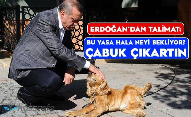 Erdoğan'dan Sert Talimat: Bu Yasa Hala Neyi Bekliyor, Çabuk Çıkartın!