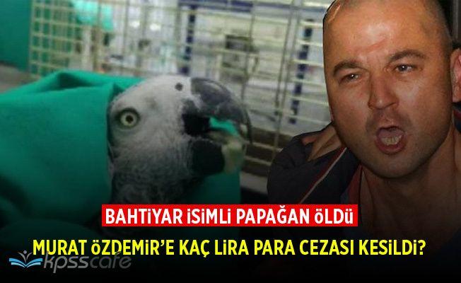 Murat Özdemir'in İşkence Ettiği Papağan Öldü, Murat Özdemir'e Kaç Lira Para Cezası Verildi?