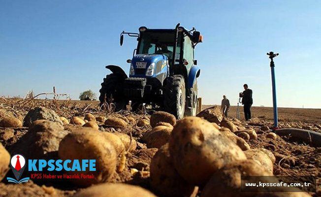 Türkiye Patates Fiyatı Artışında Dünya İkincisi!