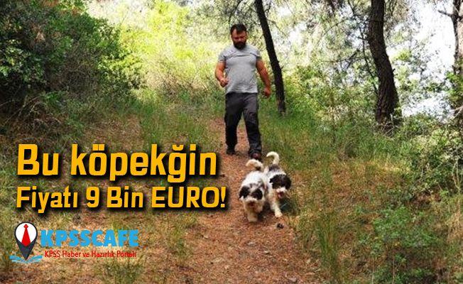 Bu köpeğin Fiyatı 9 Bin EURO!