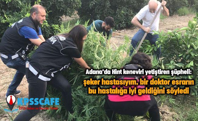 Adana'da Hint keneviri yetiştiren şüpheli: Şeker hastasıyım, bir doktor esrarın bu hastalığa iyi geldiğini söyledi