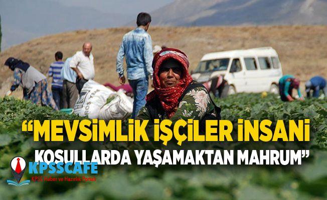 """""""Mevsimlik işçiler insani koşullarda yaşamaktan mahrum"""""""