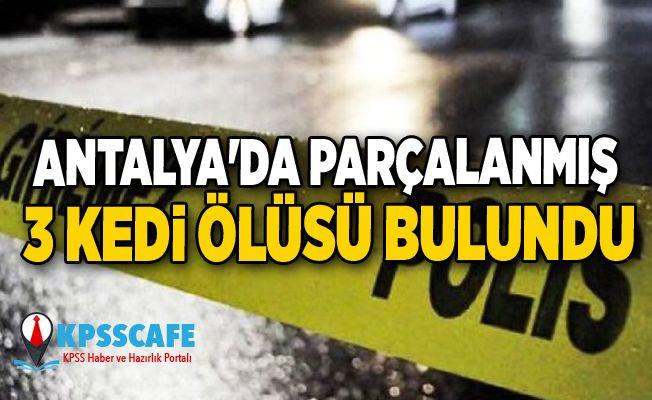 Antalya'da parçalanmış 3 kedi ölüsü bulundu