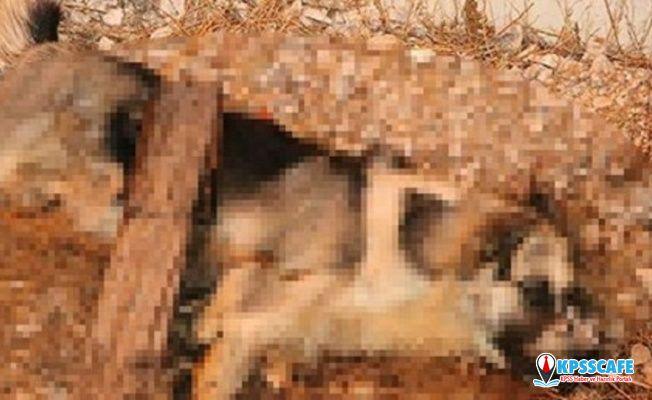 Mersin'de sokak köpeği işkenceyle öldürüldü