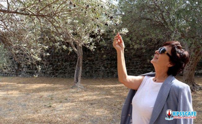 Hülya Koçyiğit'ten Barış Pınarı Harekatı'na destek: Ayaklarına taş değmesin, çok haklı bir mücadele veriyorlar