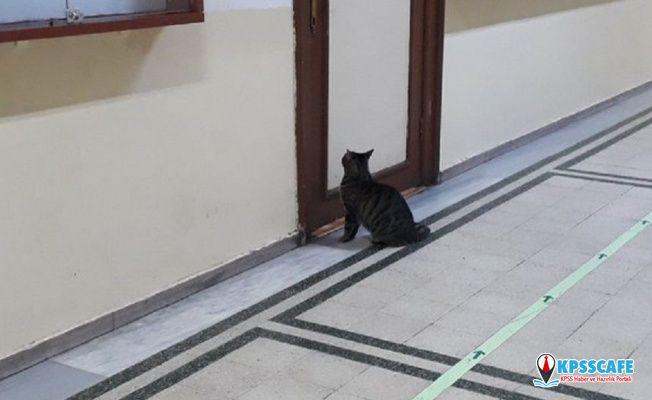 'Geç kaldığı için kediyi derse almıyorlar'