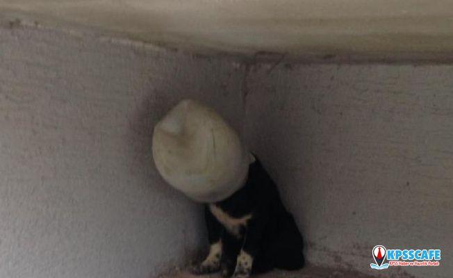 Kafasına turşu bidonu geçirilen köpek saatlerce kurtarılmayı bekledi