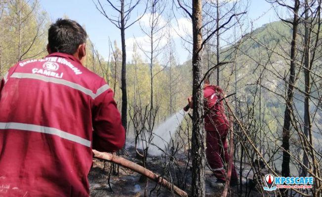 Denizli'de orman yangını: Yaklaşık 4 dönüm arazi kül oldu
